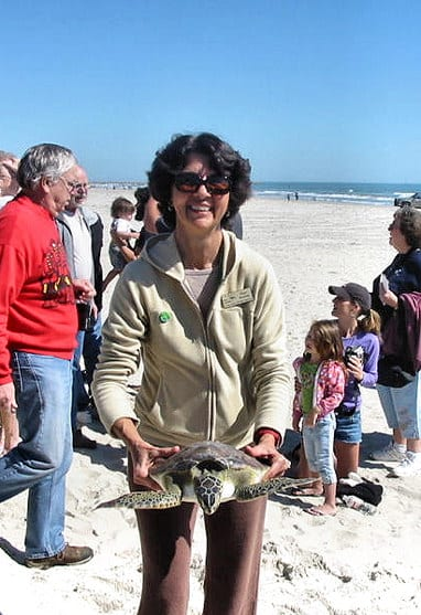 Diana Rushing prepares to release a rehabbed green turtle.