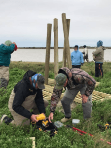 Installing nesting platforms for herons