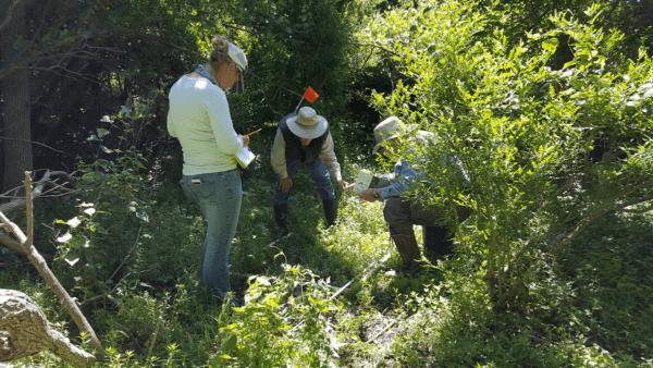 Fennessey Vegetation Survey 2019