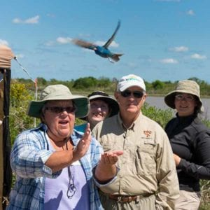 Linda releases an indigo bunting after banding