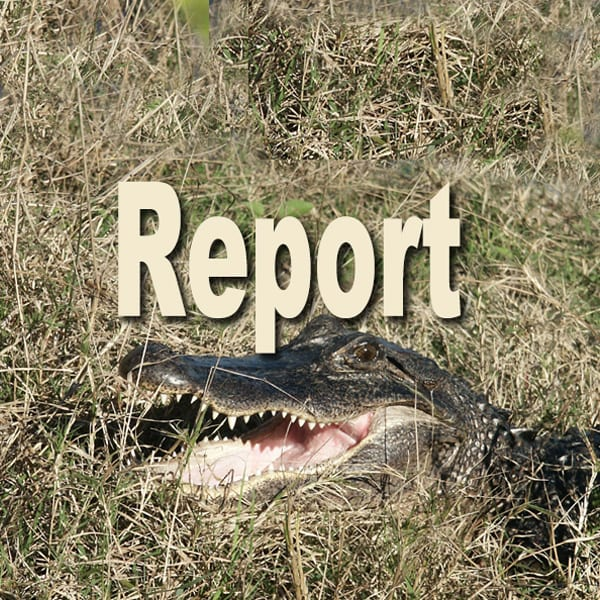 Alligator report button