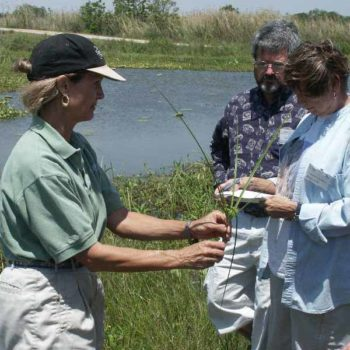 Teaching wetland sedges at Mad Island Marsh Preserve